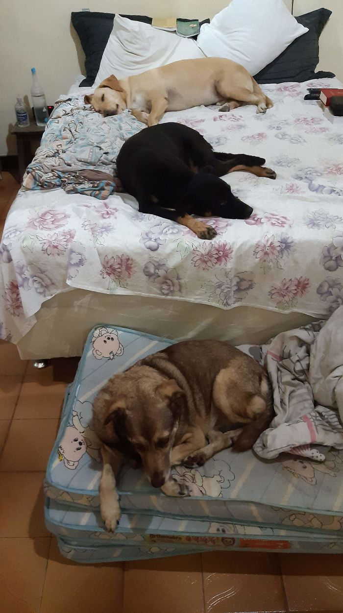 Three Stray Dogs Lying on the Bed