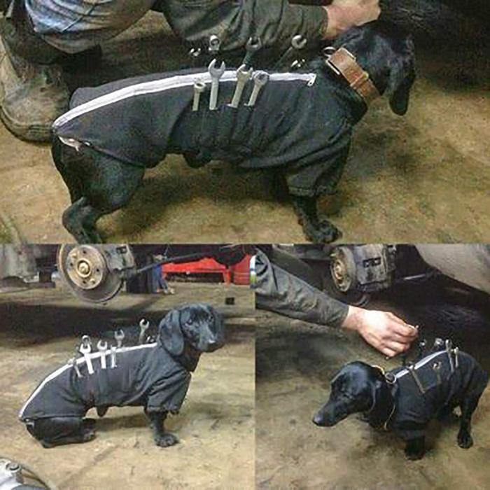 amazon dog tool jacket viral photo