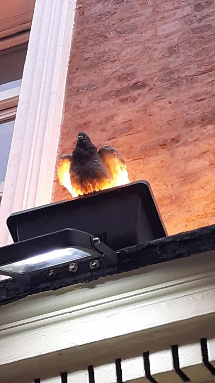 animals that look evil bird under light