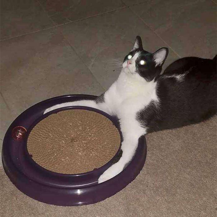 animals that look evil cat bowl