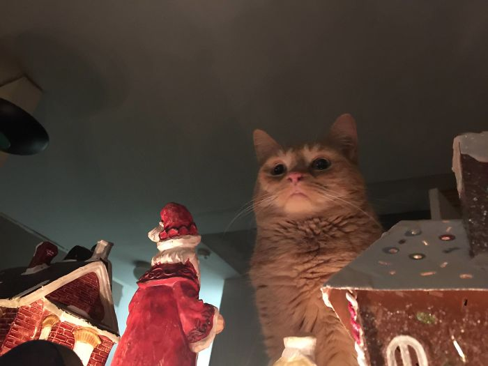 animals that look evil cat christmas invasion