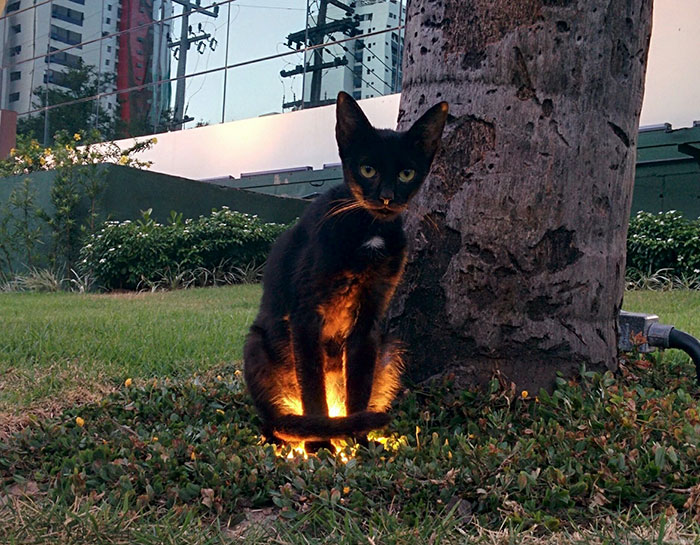 animals that look evil cat glowing light