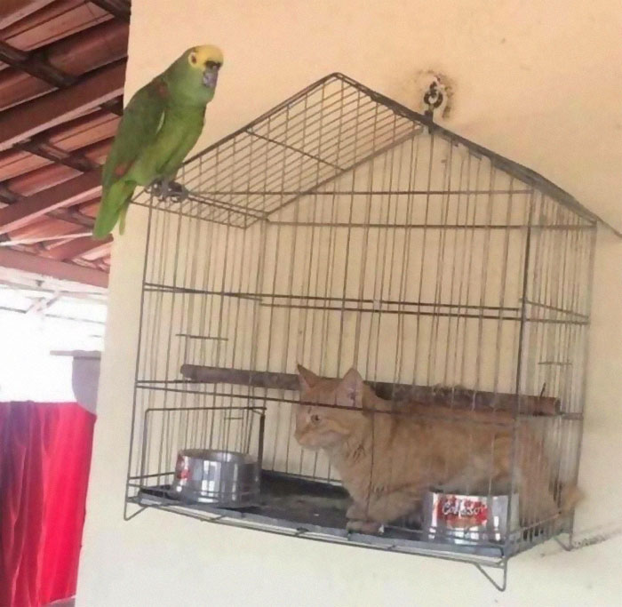 animals that look evil cat inside bird cage