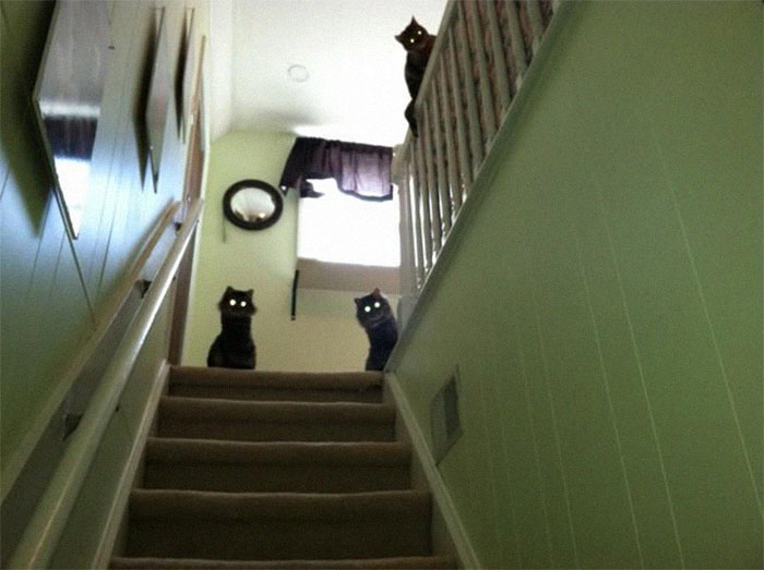 animals that look evil cats stair guardians