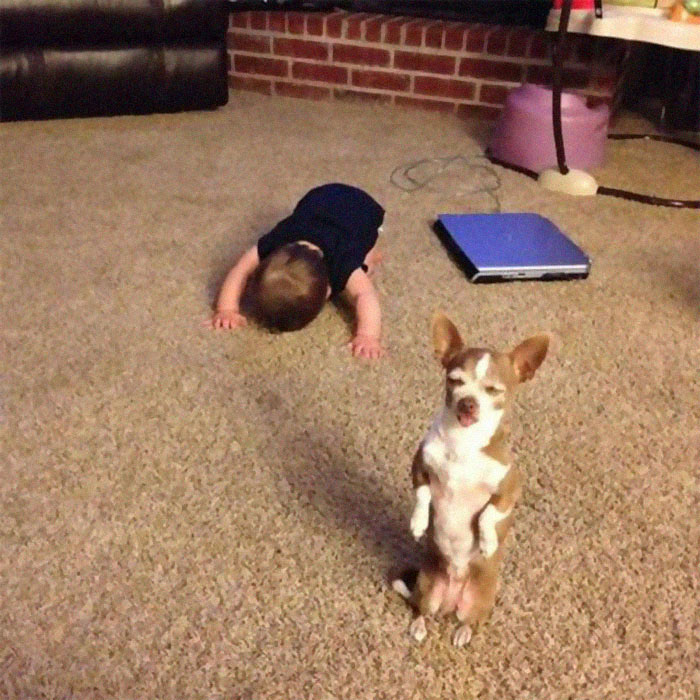 animals that look evil dog kid bowing