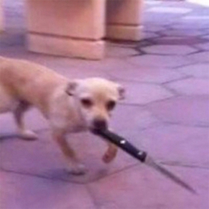 animals that look evil dog with knife