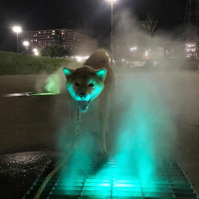 animals that look evil fox glowing light