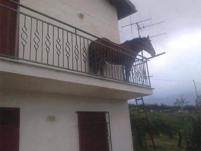 animals that look evil horse in terrace