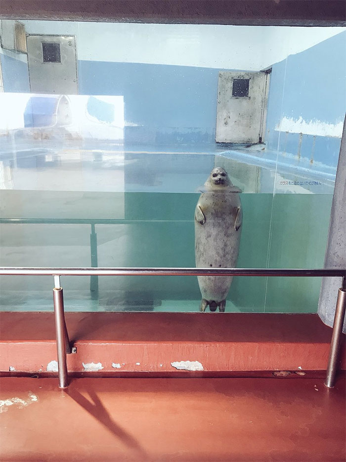 animals that look evil seal standing like human