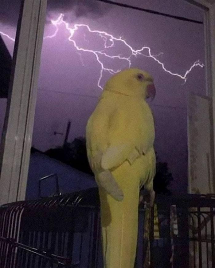 animals that look evil thunderbird