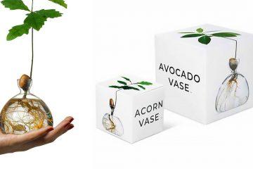 avocado and acorn glass vases
