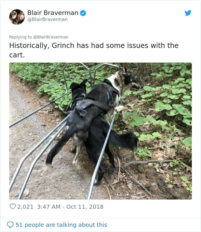 blair braverman sled dog grinch cart issues