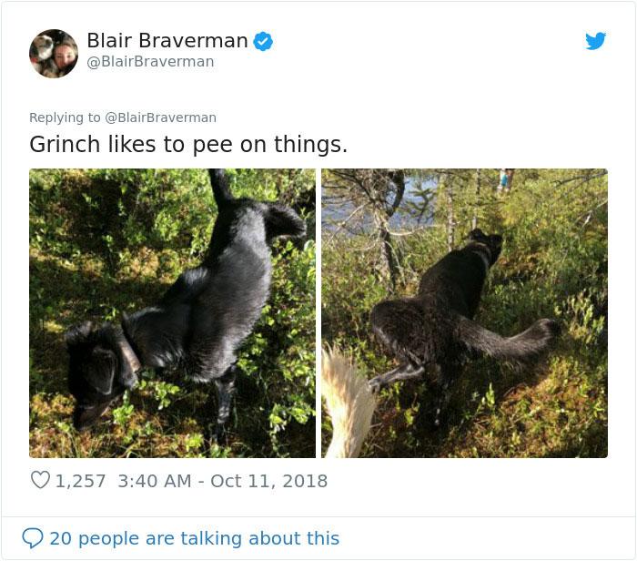 blair braverman sled dog grinch peeing