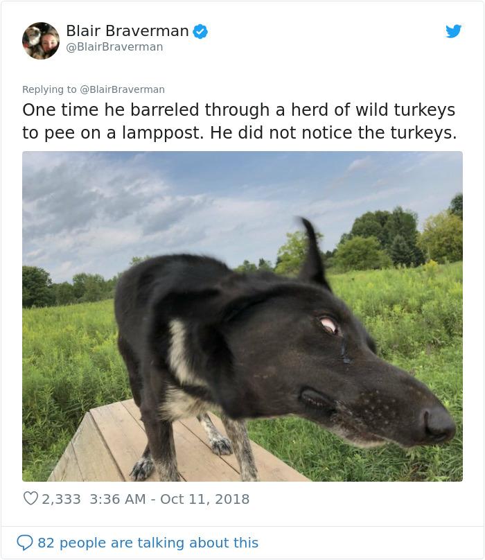 blair braverman sled dog turkey encounter