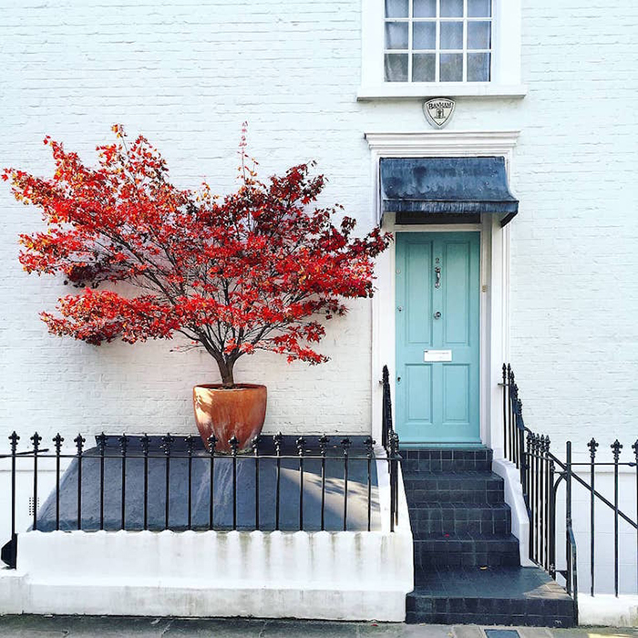 colorful front doors powder blue with striking red potted plant