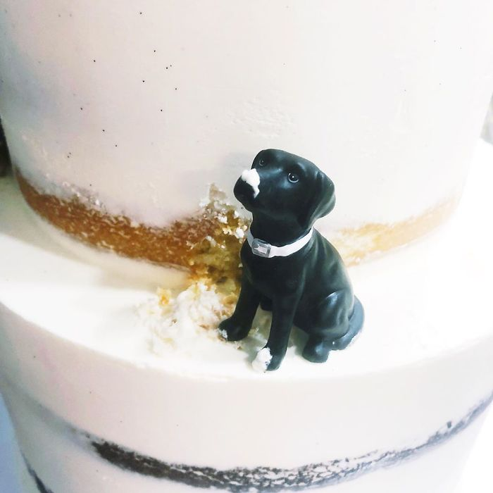 darci amazing cakes black dog