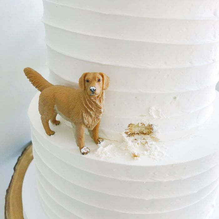 darci amazing cakes golden retreiver