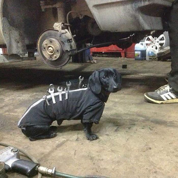 dog tool jacket mechanic assistant