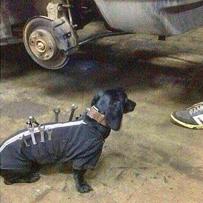 dog tool jacket russia