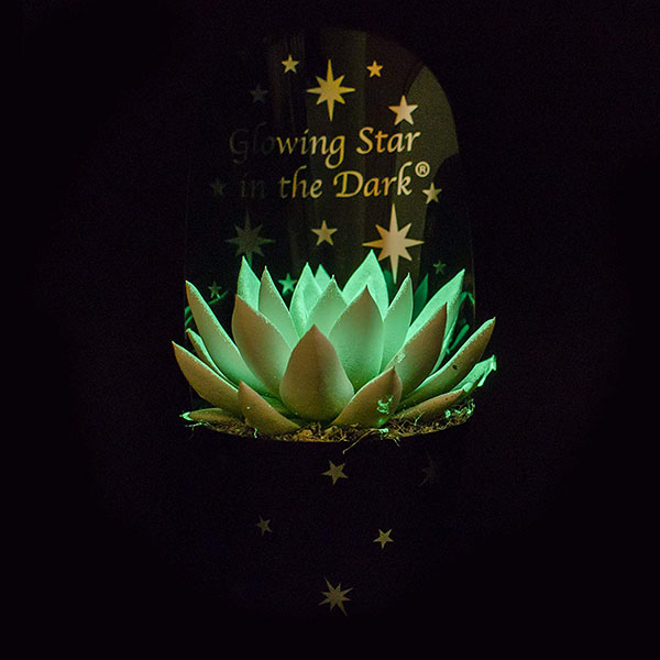 glow in the dark succulent