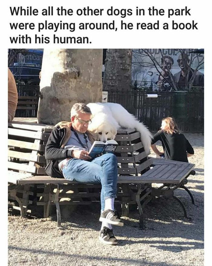 happiest animal memes book lover dog