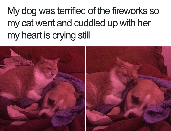 happiest animal memes cat comforts frightened dog