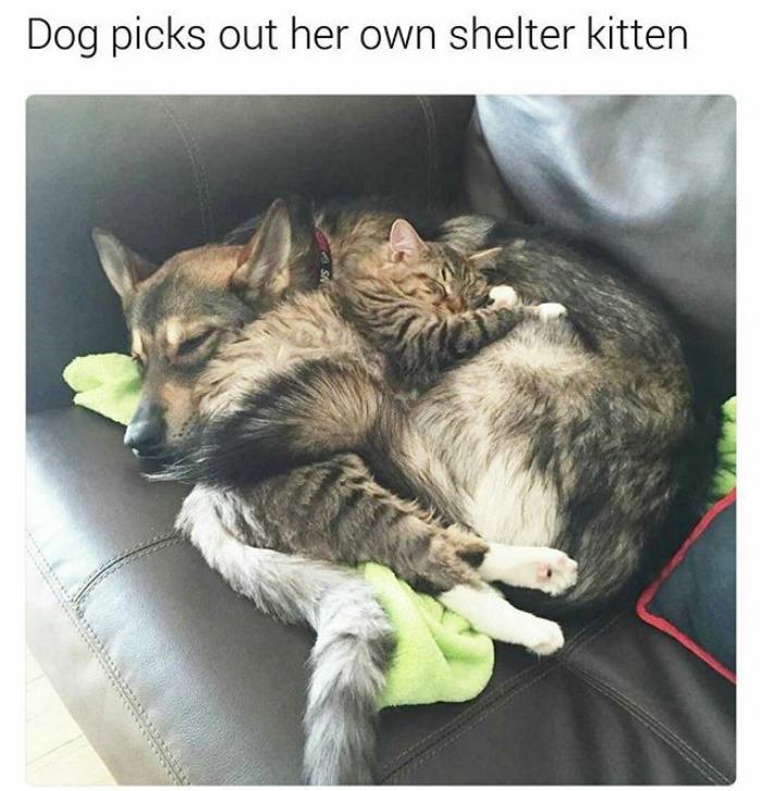 happiest animal memes dog shelter kitten