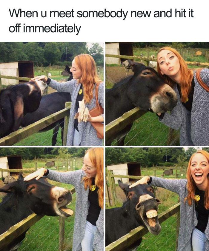 happiest animal memes friendly donkey