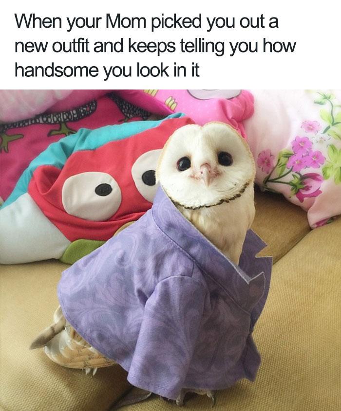 happiest animal memes happy little owl