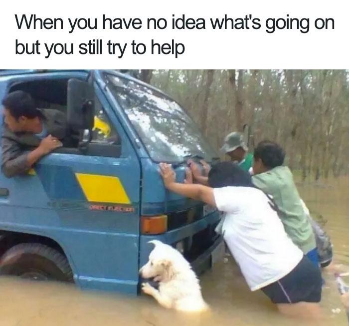 happiest animal memes helper dog
