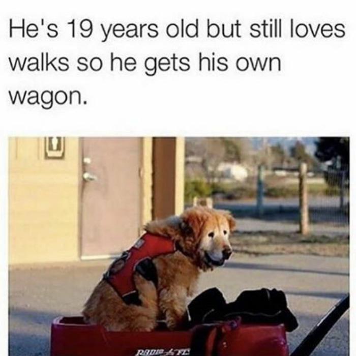 happiest animal memes old dog on wagon