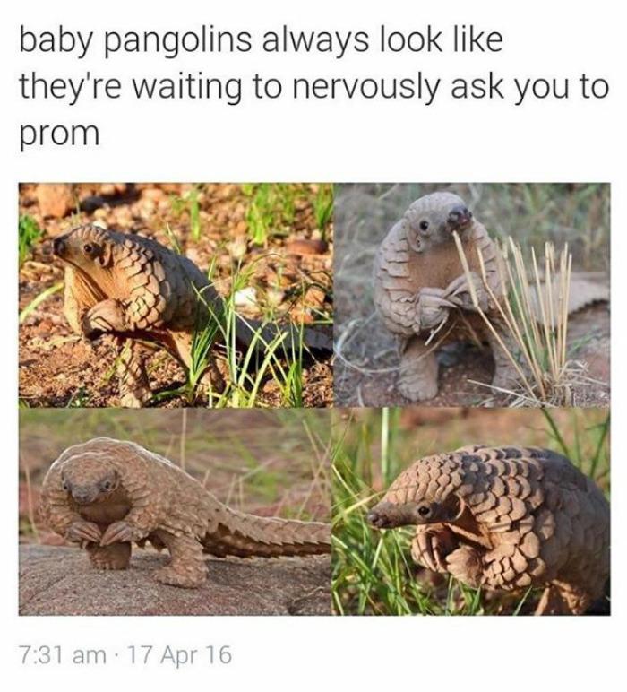 happiest animal memes pangolin arms