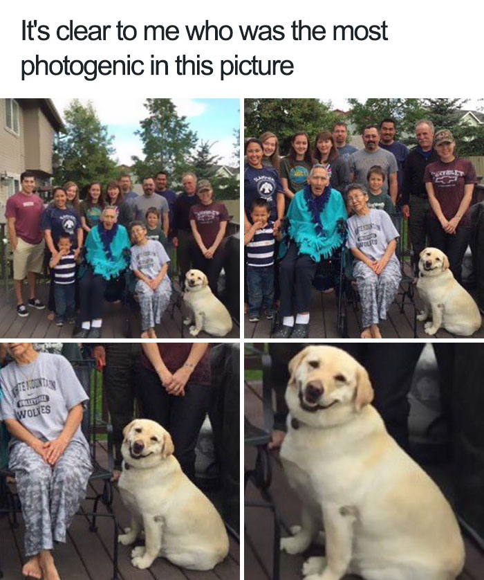 happiest animal memes photogenic dog