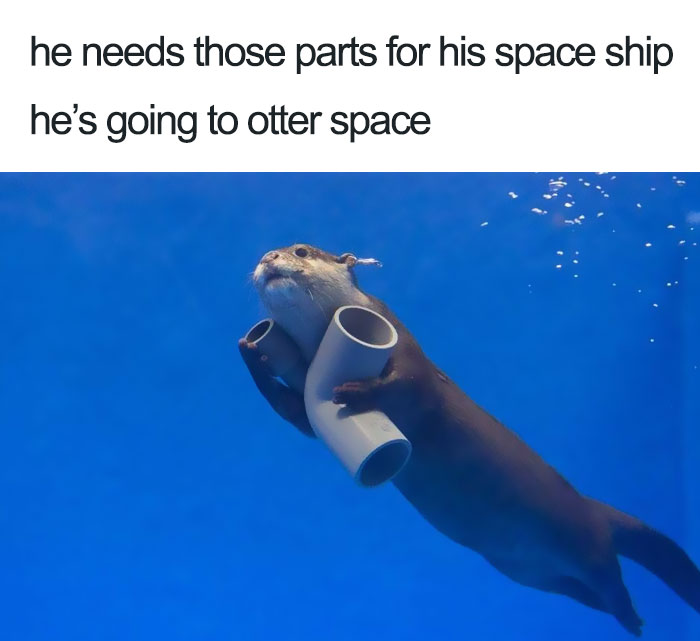 happiest animal memes pipe collector otter