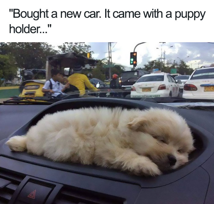 happiest animal memes puppy holder