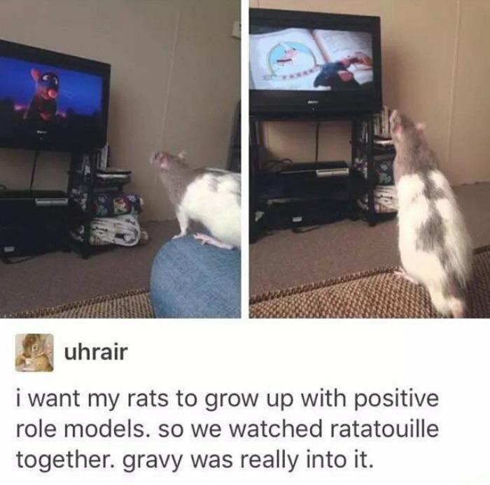happiest animal memes ratatouille fan