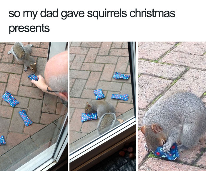 happiest animal memes snacks for squirrels