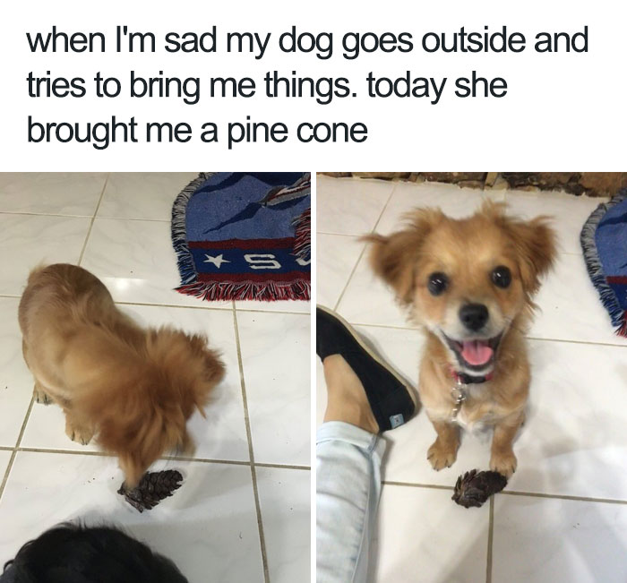 happiest animal memes stress reliever dog