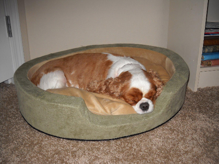 heated pet bed thermo-snuggly sleeper