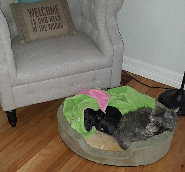 heated pet bed two dogs occupants