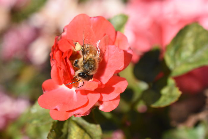 interesting animal facts bees nap on flowers