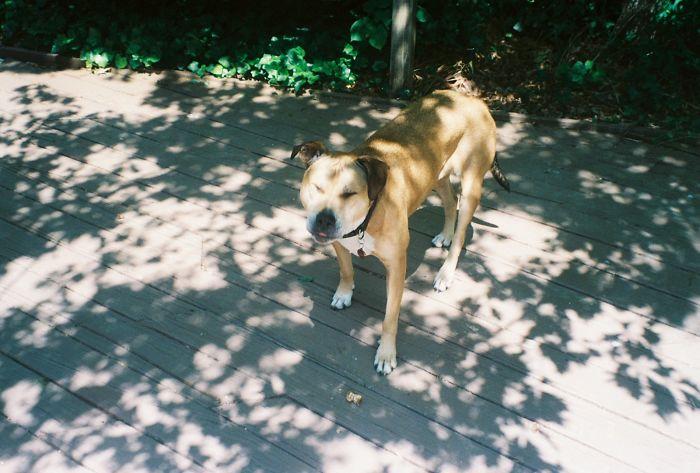interesting animal facts dog sneeze