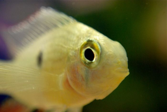 interesting animal facts fish can recognize owner