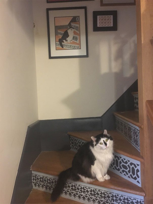 life imitated art cat on stairs