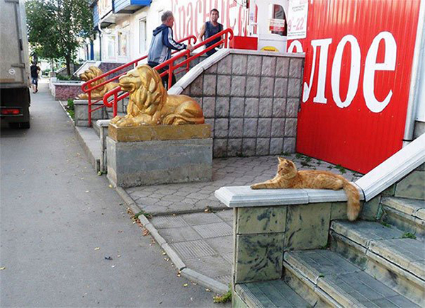 life imitated art ginger cat