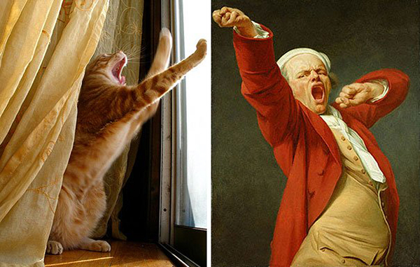 life imitated art yawning cat