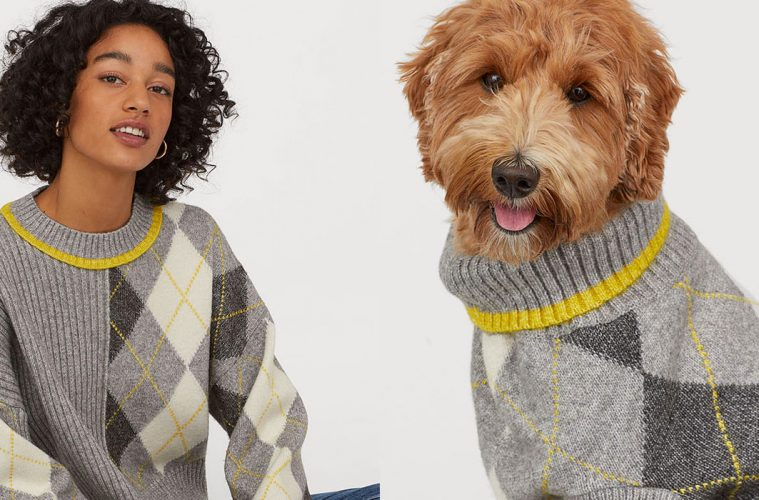 matching dog and owner jumpers