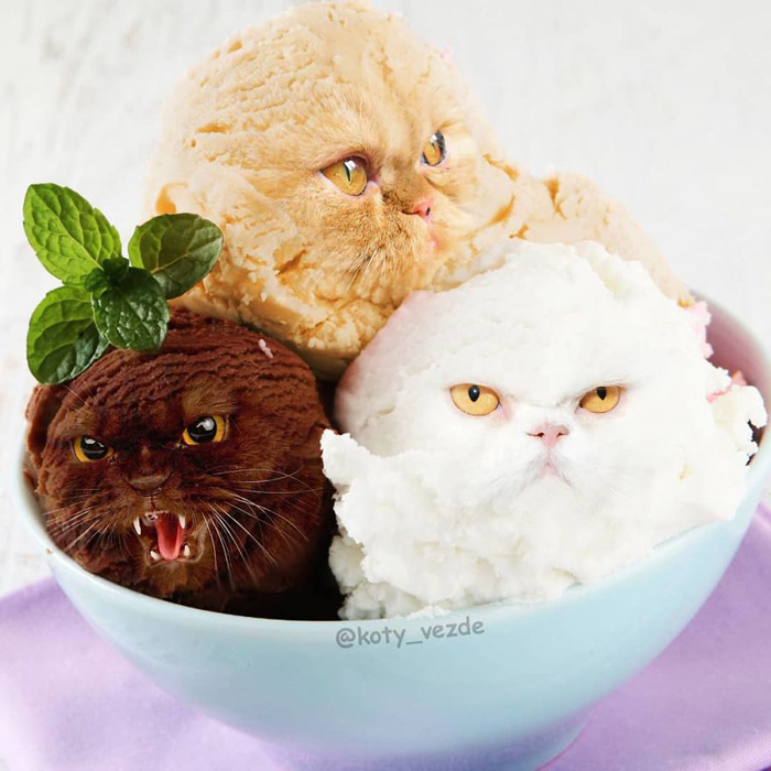 photoshopped cat faces koty vezde ice cream scoops