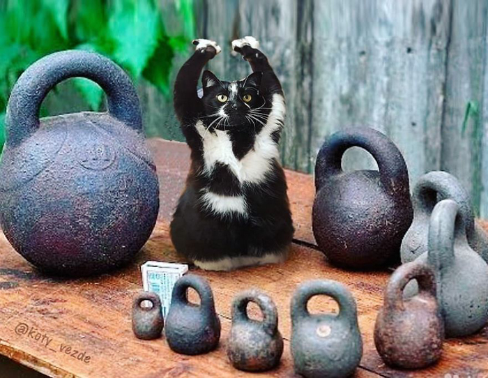 photoshopped cat faces koty vezde kettlebells
