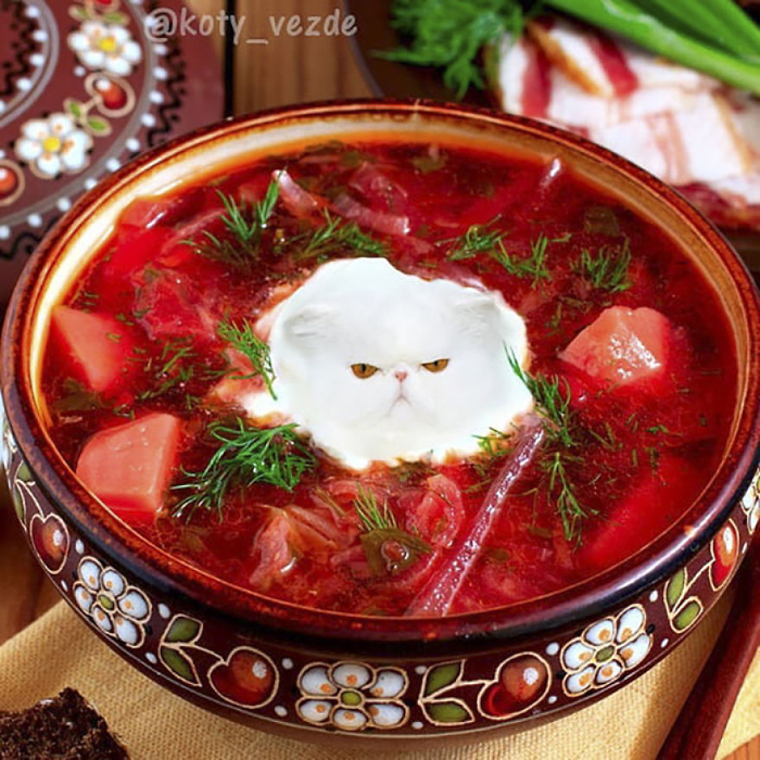 photoshopped cat faces koty vezde red soup